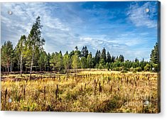 Wetlands In The Black Forest Acrylic Print