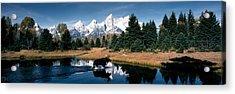Moose & Beaver Pond Grand Teton Acrylic Print