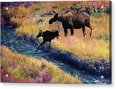 Moose And Calf Acrylic Print
