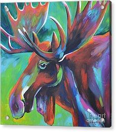 Moose Acrylic Print by Cher Devereaux
