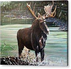 Moose County Acrylic Print