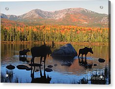 Moose Family Scenic Acrylic Print