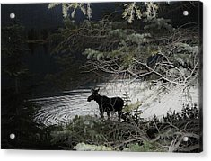 Moose Has Happy Hour Acrylic Print by Cathy Long