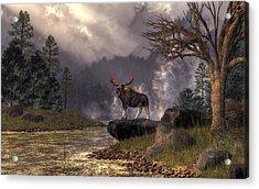 Moose In The Adirondacks Acrylic Print