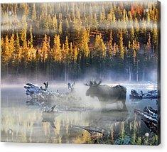 Moose Lake Acrylic Print
