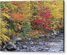 Moose River Autumn Acrylic Print by Alan L Graham