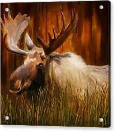 Moose Solitude Acrylic Print