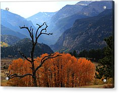 Acrylic Print featuring the photograph Moraine Park by Shane Bechler