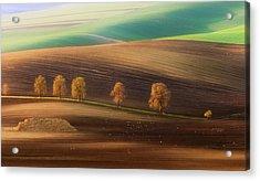 Moravian Trees Acrylic Print