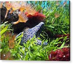 Moray Underwater Acrylic Print by Tilen Hrovatic