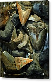 More Megalodon Teeth Acrylic Print