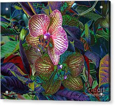 More Orchids Acrylic Print by Doris Wood
