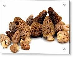 Morel Mushroom Acrylic Print by Don Bendickson