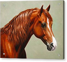 Morgan Horse - Flame Acrylic Print by Crista Forest