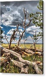 Mormon Lake Az Acrylic Print