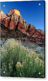 Morning At Zion National Park Acrylic Print by Eric Foltz