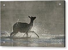 Morning Bath Acrylic Print by Bob Dowling