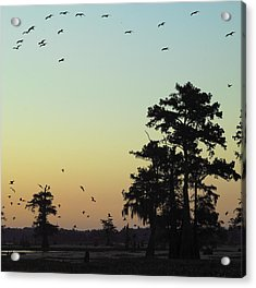 Acrylic Print featuring the photograph Morning Birds by Silke Brubaker