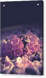 Morning Bloom Acrylic Print