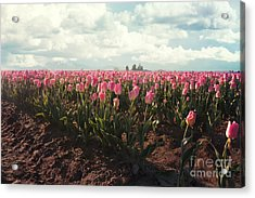 Acrylic Print featuring the photograph Morning Brillance by Sylvia Cook