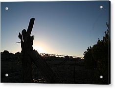 Acrylic Print featuring the pyrography Morning by David S Reynolds