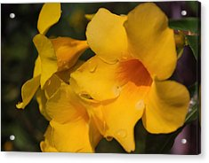 Acrylic Print featuring the photograph Morning  Delight by Miguel Winterpacht