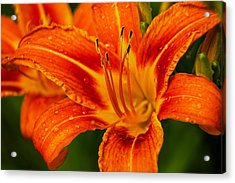 Acrylic Print featuring the photograph Morning Dew by Dave Files