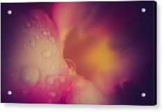 Morning Dew - East Acrylic Print