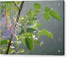 Morning Dew Flower Fairy Acrylic Print