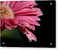Morning Dew Acrylic Print by Joe Schofield