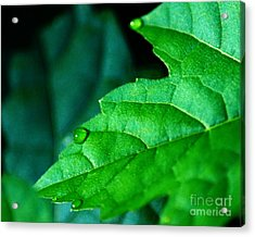 Acrylic Print featuring the photograph Morning Dew by JRP Photography