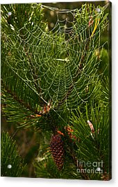 Morning Dew On Cobweb Acrylic Print