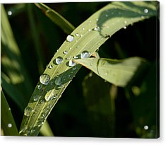 Morning Dew Acrylic Print by Paige Sims