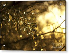 Acrylic Print featuring the digital art Morning Dew by Serene Maisey