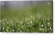 Morning Dew Acrylic Print by Silke Brubaker