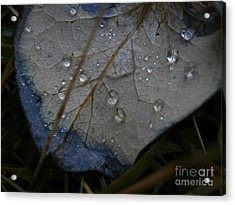 Morning Dew Acrylic Print by Steven Valkenberg