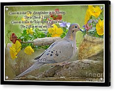 Morning Dove With Verse Acrylic Print by Debbie Portwood