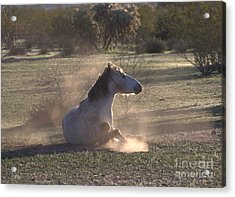 Acrylic Print featuring the photograph Morning Dust Bath by Ruth Jolly
