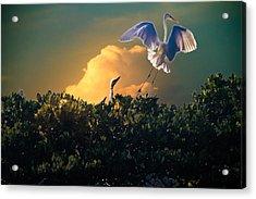 Morning Egret Acrylic Print