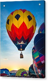 Morning Flight Acrylic Print