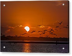 Acrylic Print featuring the photograph Morning Flight by RC Pics