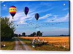 Morning Flight Acrylic Print by Tom Schmidt