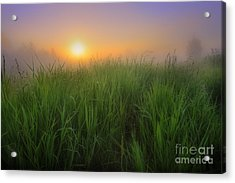 Morning Fresh Acrylic Print