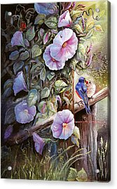 Morning Glories And Bluebirds. Acrylic Print
