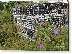 Morning Glories And Crab Traps Acrylic Print