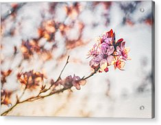 Acrylic Print featuring the photograph Morning Glory by Joshua Minso
