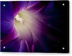 Morning Glory Purple Acrylic Print