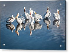 Morning Groom Acrylic Print by Jan Davies