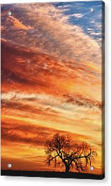Morning Has Broken Acrylic Print by James BO  Insogna