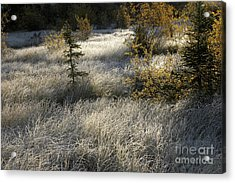 Acrylic Print featuring the photograph Morning Hoar Frost by Jessie Parker